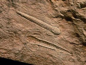 Yacimiento Paleontológico de Murero