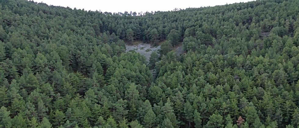 Pinsapar / Pine forest