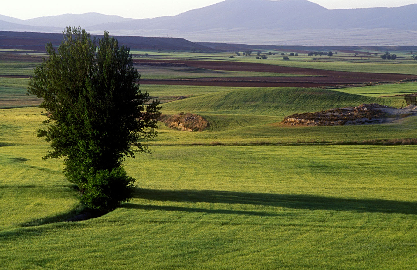 Campos cereal / Agricultural fields