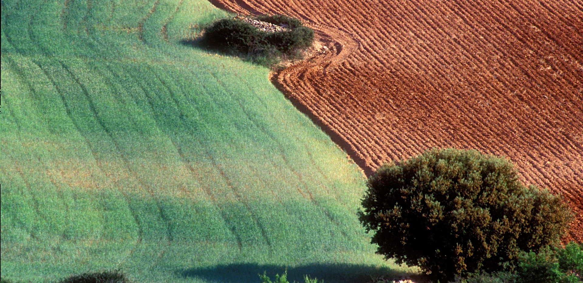 Campos rojos / Agricultural fields