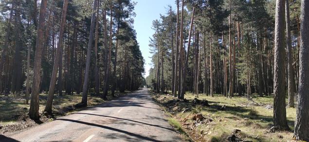 Carretera entre pinares