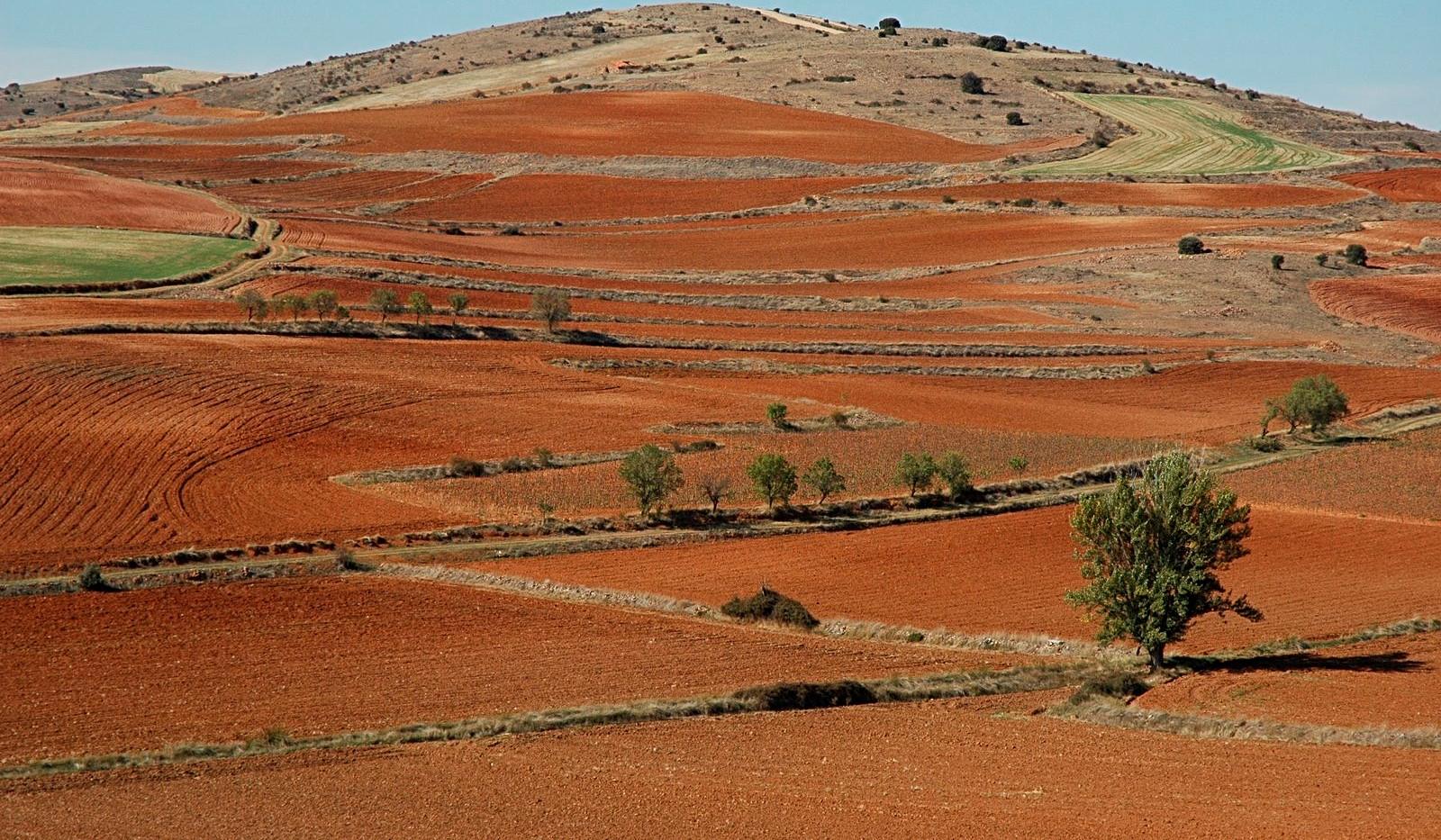 Campos labrados / Agricultural fields