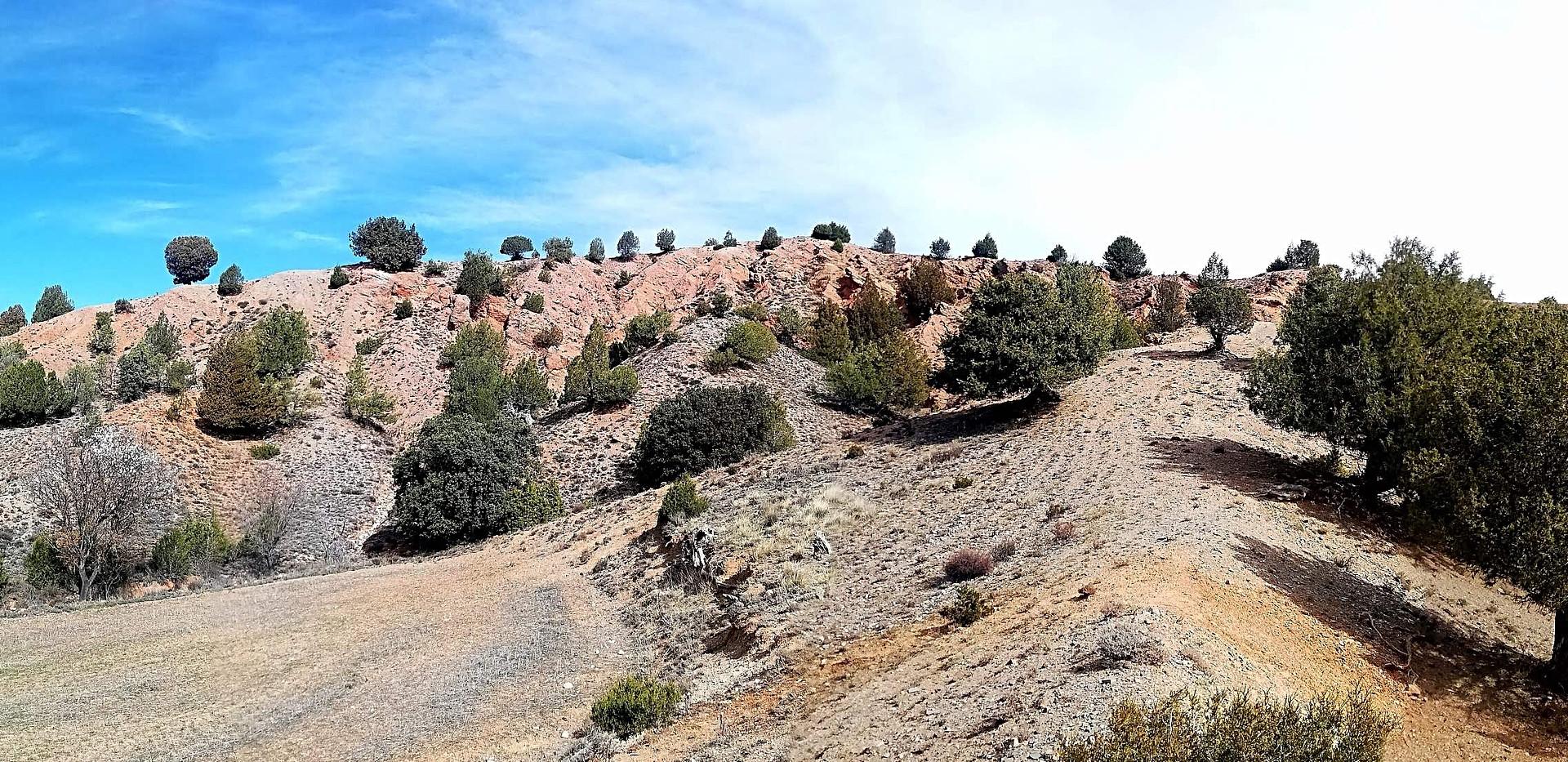Sabinar en ladera / Sabinas Forest