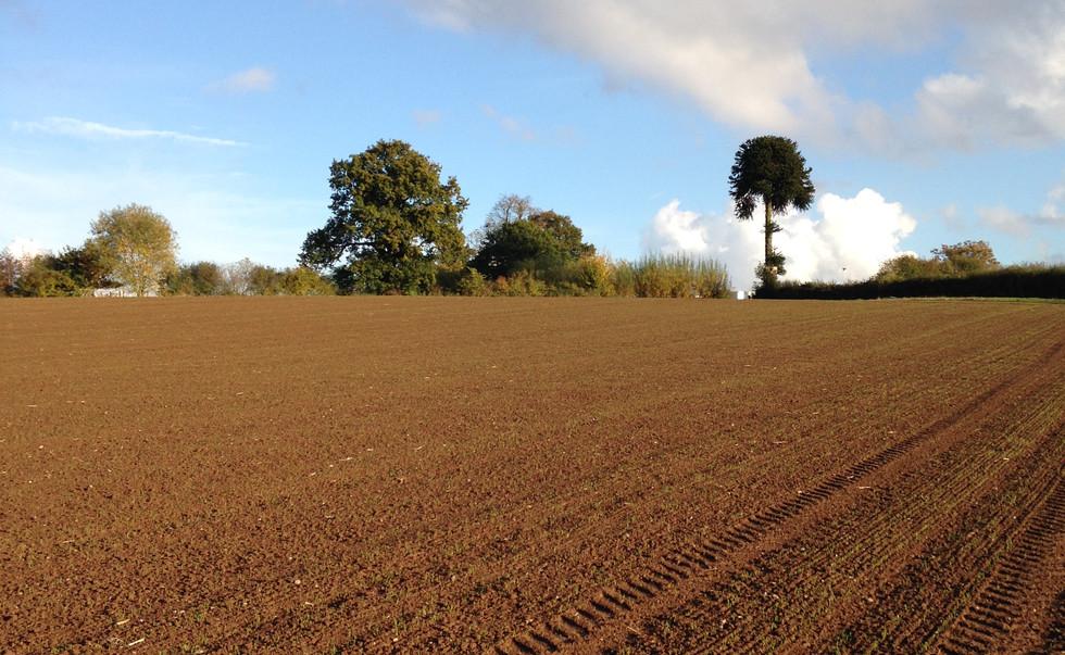 ploughed field.jpg
