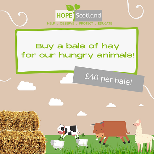 Buy a bale of hay!