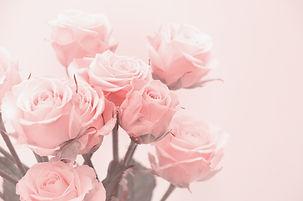 Pink roses close-up.jpg