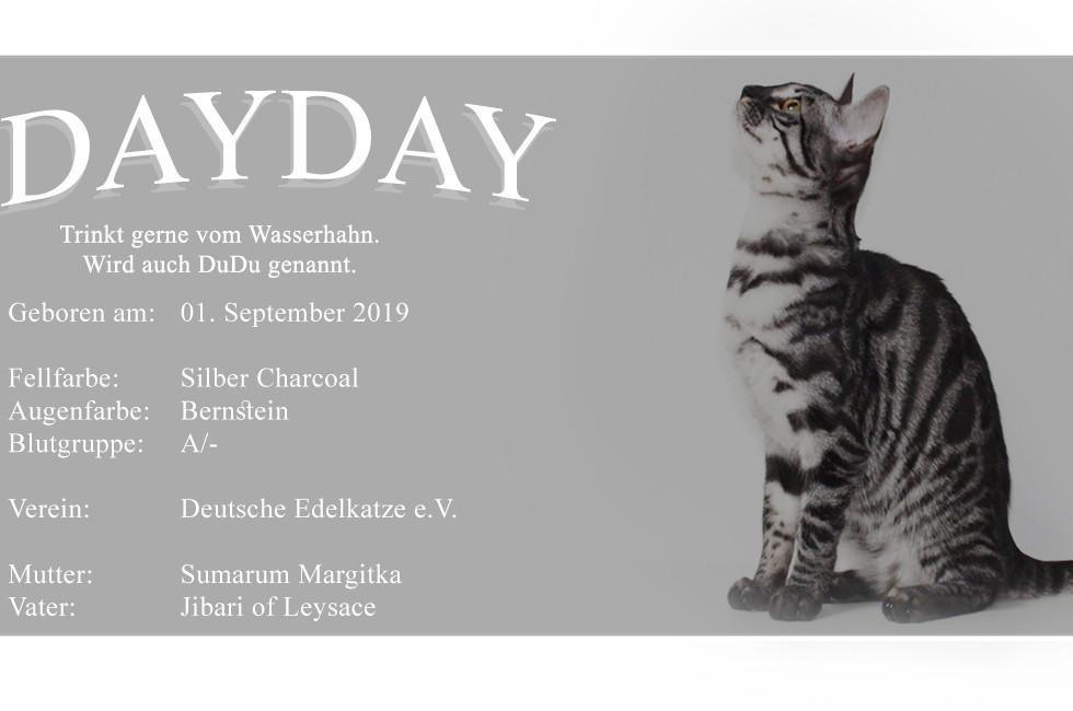 DAYDAY-HP-PC.jpg
