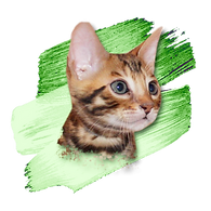 Sticker Kitten 4.png