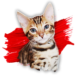 Sticker Kitten 3.png