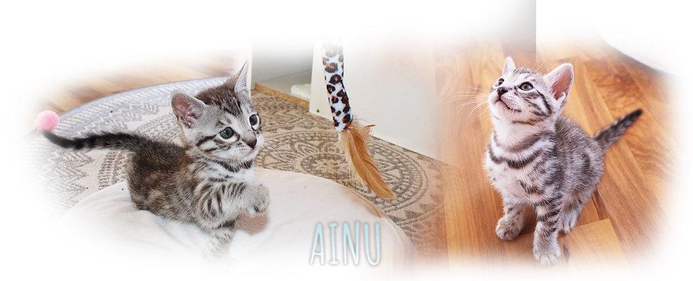 AINU.jpg