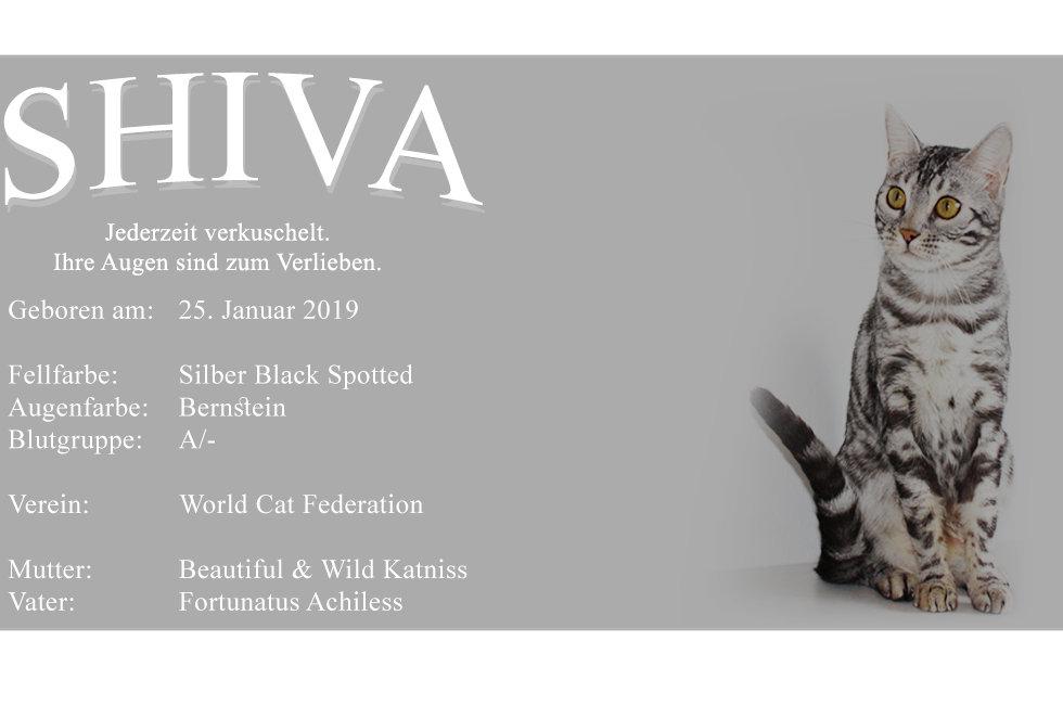 SHIVA-HP-PC.jpg