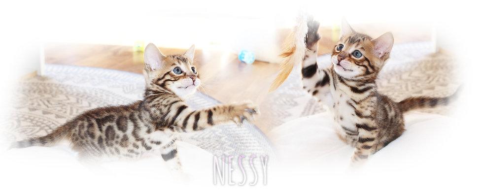 NESSY.jpg