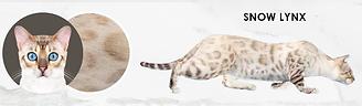 Snow-Lynx.png