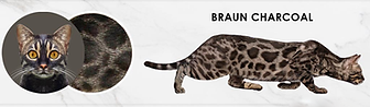 Baun-Charcoal.png