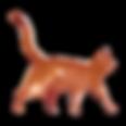 Cat Aquarelle 5