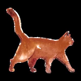 Akvarel Cat 5