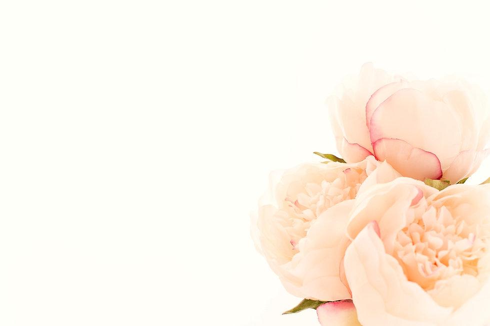 white%20flowers_edited.jpg