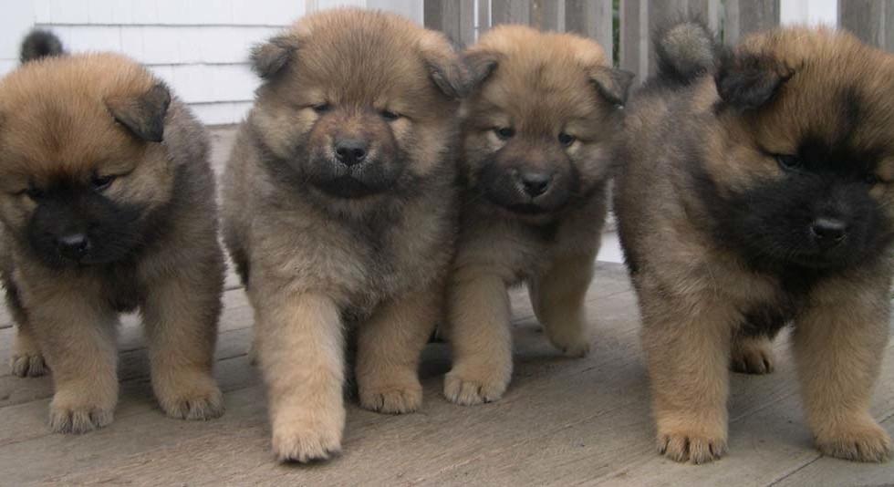 puppy_5.jpg