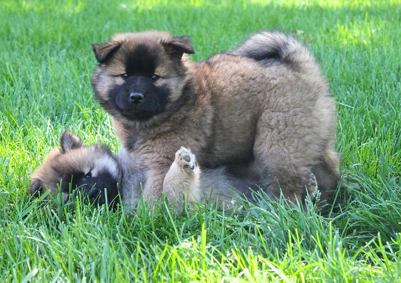 puppy_in_spring_3.jpg