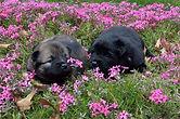 pups_in_flower_field.jpg