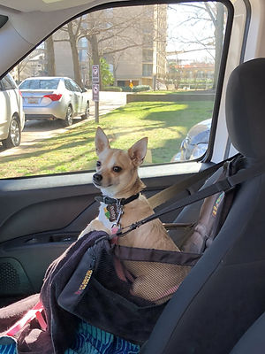 Cascade campervan rental is friendly for dogs in DC