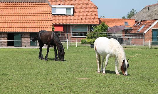 paardrijden Hoeve Hogeslag