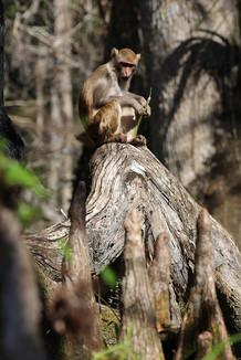 Monkey on a Knee(S).jpg