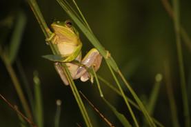 Frog Nice.jpg
