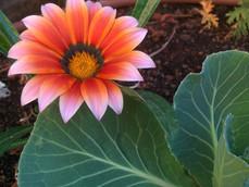 פרחים בגינתנו