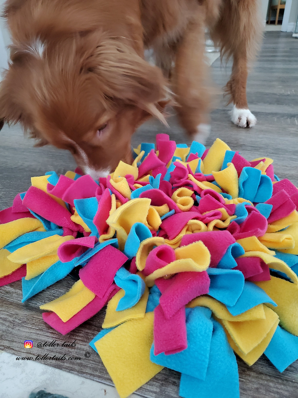 Henry Toller Tails, dog, snuffling canine enrichment snuffle mat