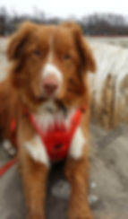Henry Toller Tails beach dog copyrighted photo