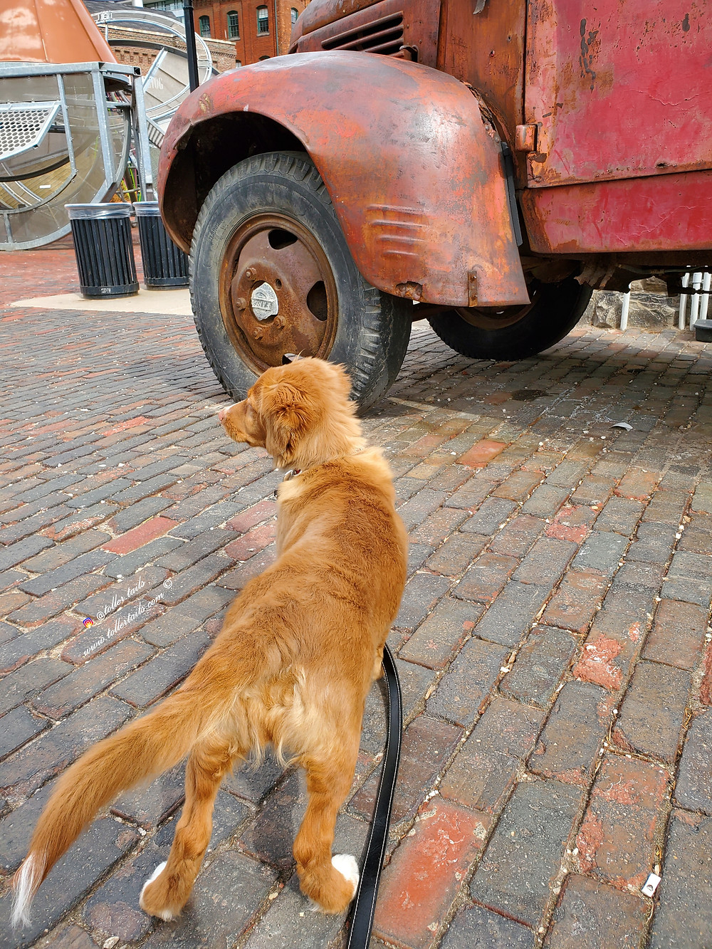Hedy Toller Tails a dog is walking