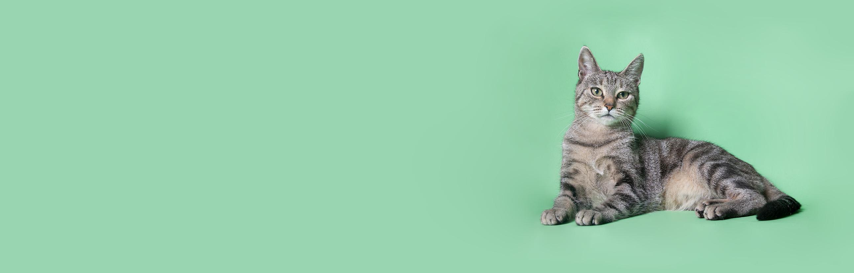 Кошка на зеленый