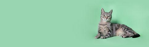 Yeşil üzerine Kedi