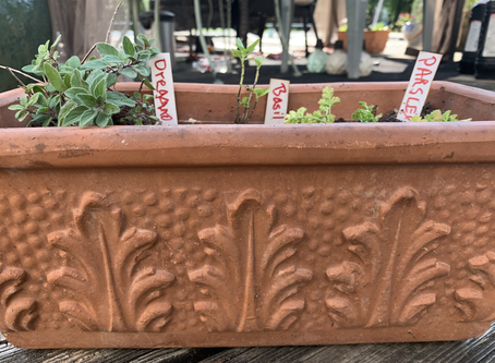 How to Grow Multiple Herbs in One Pot