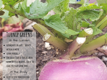 The Many Uses of Turnip Greens
