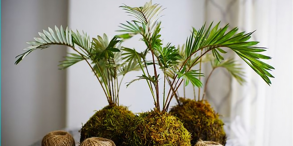 Atelier Kokedama (plante suspendue)