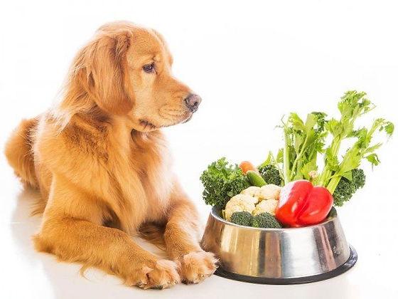 hond-en-groente.jpg