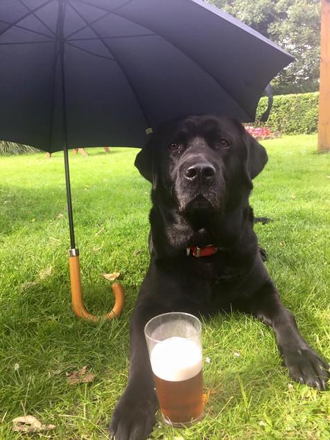 Henry Umbrella.jpg