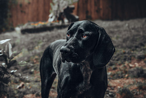 éducation canine.jpg