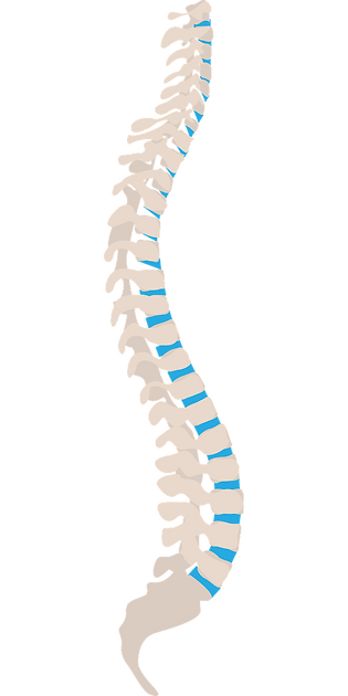 spine-1925870_1280.png