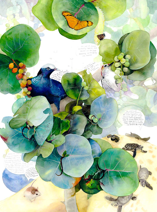Florida Sea Grape Relationships watrcolor painting By Kim Heise