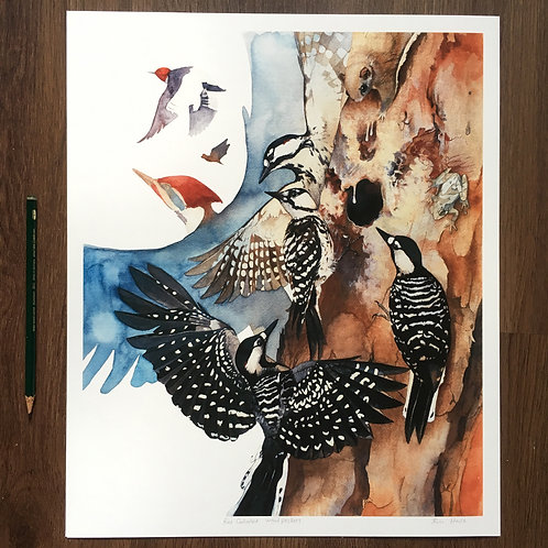 Red-Cockaded Woodpeckers large print