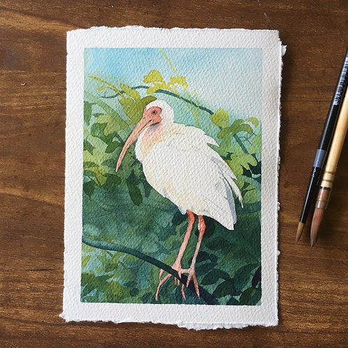 Custom Watercolor Illustrations