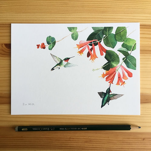 Ruby-Throated Hummingbirds and Coral Honeysuckle small print