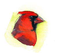 Male Cardinal by Kim Heise