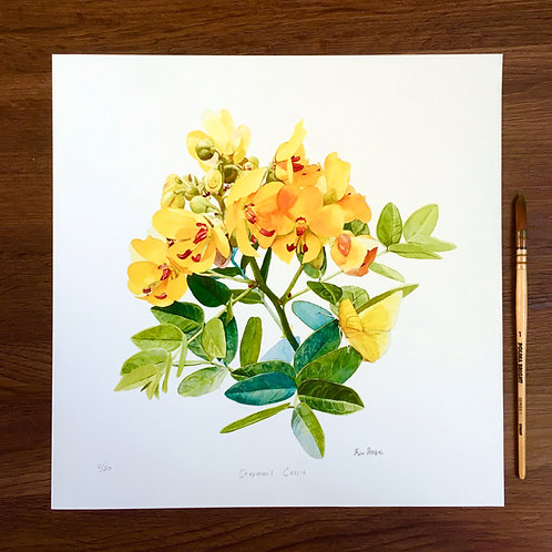 Chapman's Cassia limited edition large print