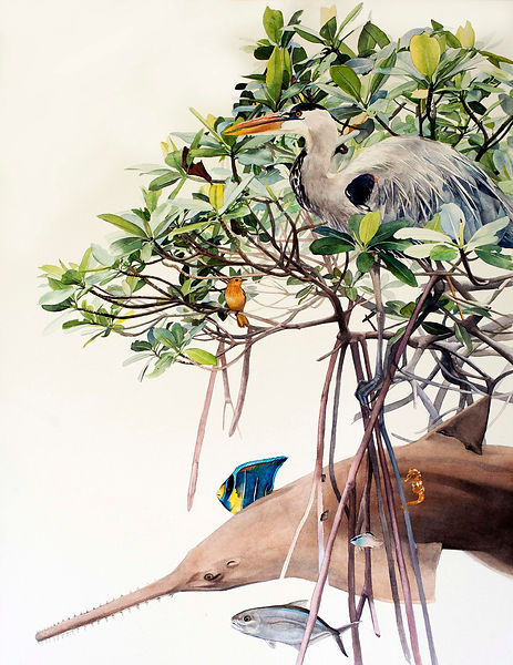 Florida Mangrove Relationships watercolor painting by Kim Heise