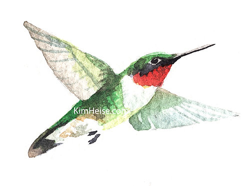Ruby Throated Hummingbird 1