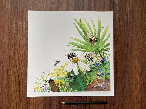 Florida Native Bees